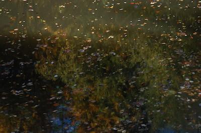 Herbstliche Blätter auf einem Teich